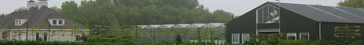 Keus uit meer dan 600 soorten Coniferen Thuja Brabant 2 meter HOOG € 8,95 (min. 50 stuks)